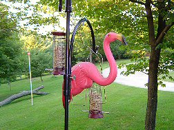 Flamingo pic 10 - flamingo hanging from bird feeder